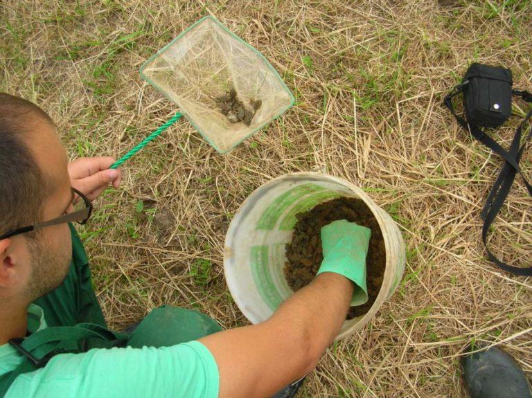 Inwentaryzacja przyrodnicza – inwentaryzacja na najwyższym poziomie