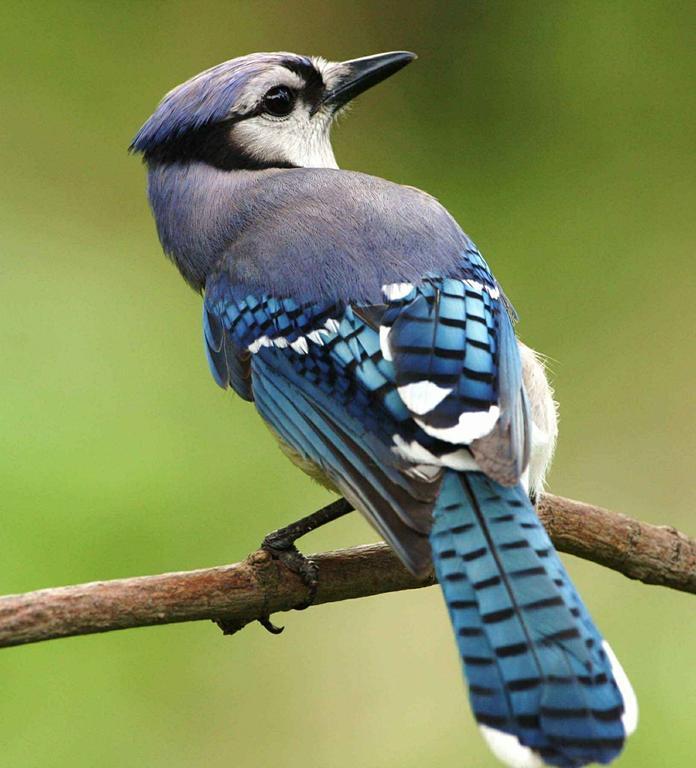 Gdzie kupić skuteczną siatkę na balkon przeciw ptakom?